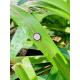 Pulsera Plata IP Rose Cerquillo Circonitas